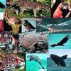 Species Diversity: Understanding the details
