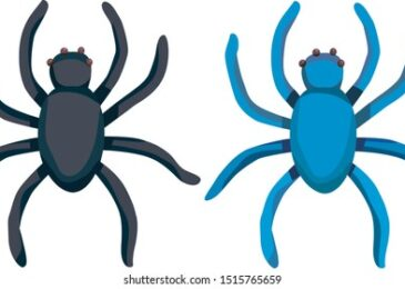 Number of Legs Spider Have & Its Pros